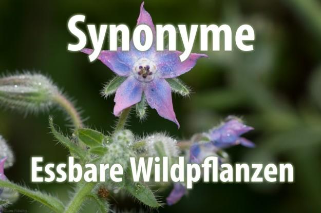 Synonyme - Essbare Wildpflanzen