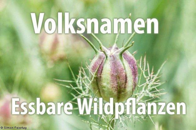 Volksnamen - Essbare Wildpflanzen
